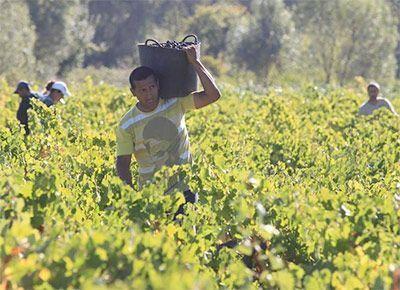 Domingo XXV (A): los obreros reciben igual salario