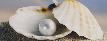 Domingo XVII. La perla