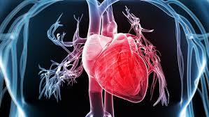 Domingo XXII. El corazón puro e impuro